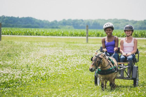 Equestrian Camp - Driving in Field 3-1