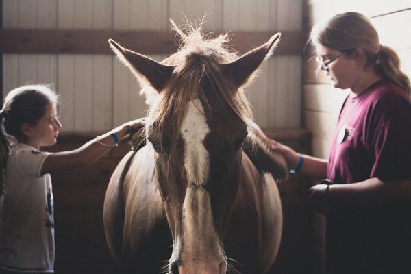 Equestrian Camp - Horse in Stall-1