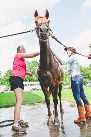 Horse Clean-1