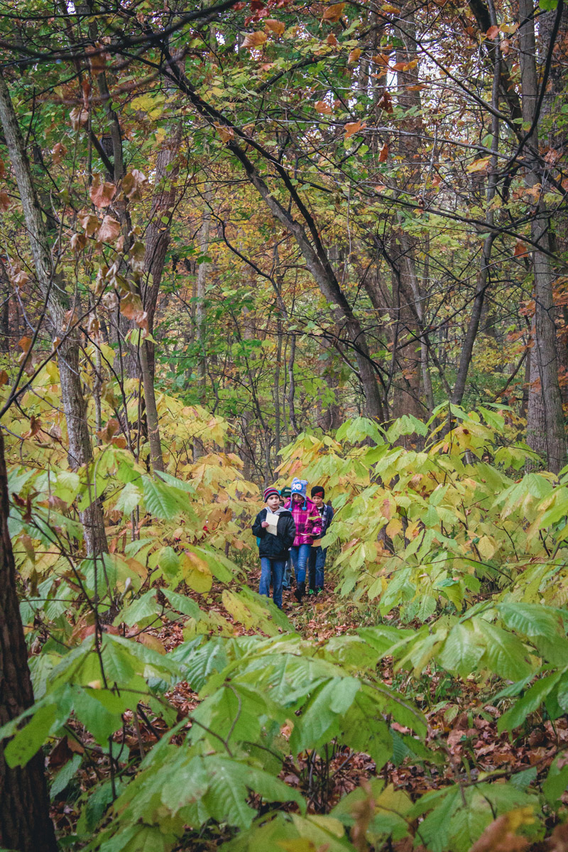 Wandering-in-the-Woods---Outdoor-Education