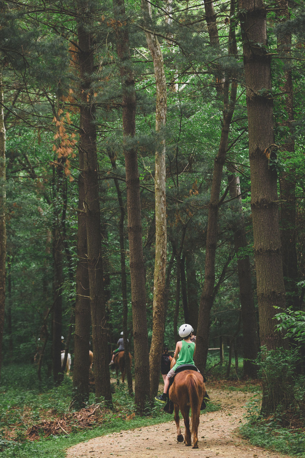 pine-forest-trail-ride-3